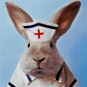 medicating your rabbit   wabbitwiki
