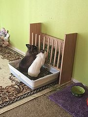 Example Of A DIY Wooden Dowel Hay Rack Being Used By Leeloo And Simon Photo C BEaton With Permission