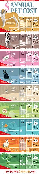 Cost To Spay A Cat Eastside Animal Hospital