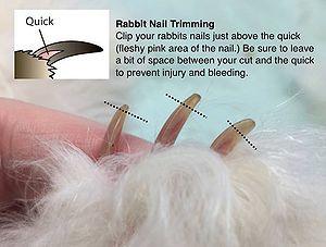 rabbit nails - Nails Art Ideas