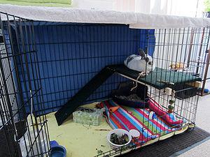 Dog Crates Online In Ontario Canada