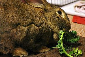 Vegetables - WabbitWiki