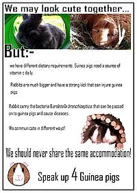Image Result For Can Dogs Injure