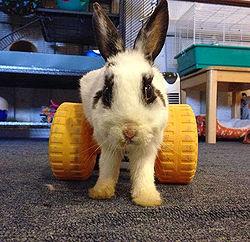Special Needs Rabbits Wabbitwiki